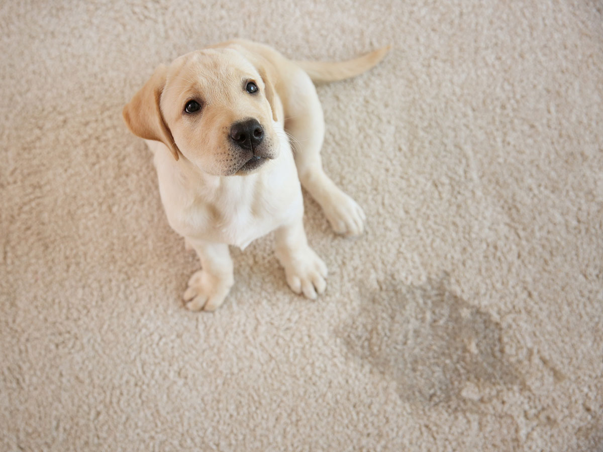 FAQs About Carpet Cleaning & Odor Removal | Boise, ID | Kung